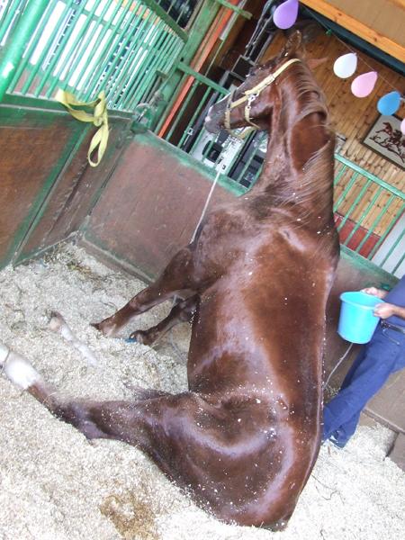 פגיעת וירוס מסוג ר.נ.א בסוסים 1
