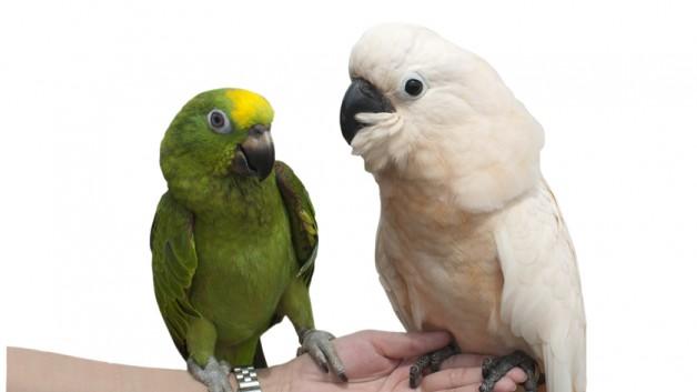 https://www.ben-zaken.co.il/wp-content/uploads/2013/05/birds-628x353.jpg