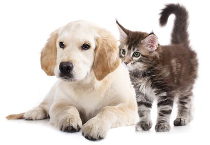 גידול כלב או חתול ?