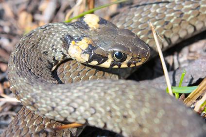 פעילות הנחשים בקיץ