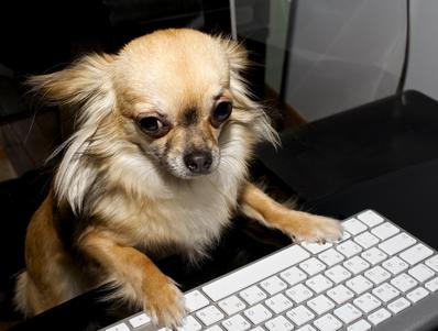 https://www.ben-zaken.co.il/wp-content/uploads/2014/04/net-and-dogs.jpg