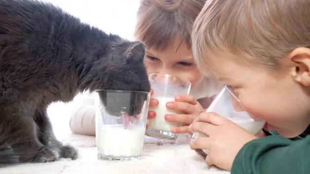https://www.ben-zaken.co.il/wp-content/uploads/2014/05/dring_milk-628x353.jpg
