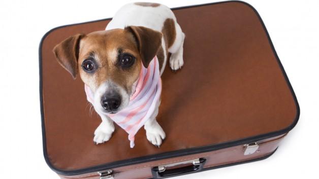 https://www.ben-zaken.co.il/wp-content/uploads/2014/05/suitcase-628x353.jpg