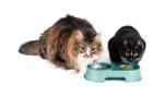 מזון חתולים