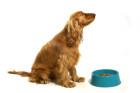 מזון כלבים