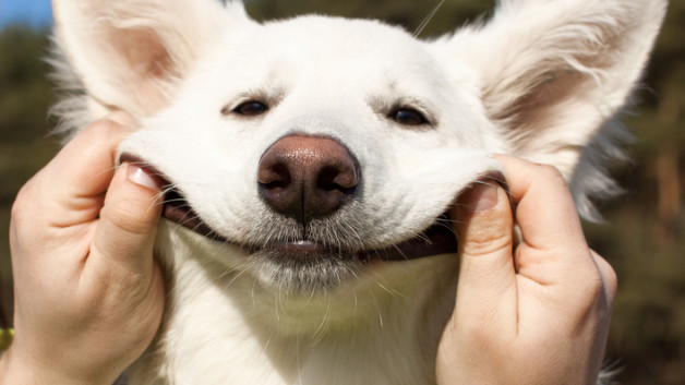 https://www.ben-zaken.co.il/wp-content/uploads/2015/02/smiling-dog-628x353.jpg