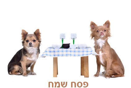 https://www.ben-zaken.co.il/wp-content/uploads/2015/03/pesach_dogs.jpg