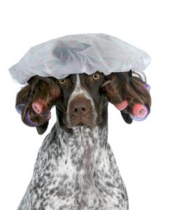 טיפוח פרוות כלב