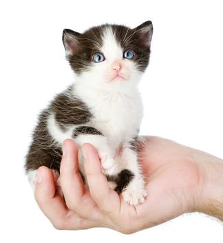 https://www.ben-zaken.co.il/wp-content/uploads/2015/05/cat_eyes-324x353.jpg